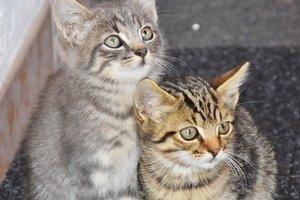 Бездомным котам Кропивницкого устроят фотосессию