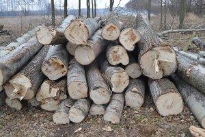 Рада ужесточила ответственность за уничтожение лесов