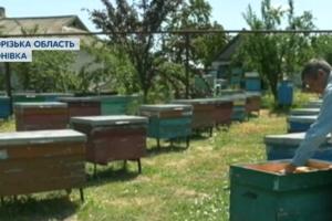 В Запорожской области массово гибнут пчелы: пасечники потеряли миллионы гривен