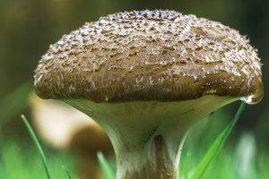 Отравление грибами в Одесской области: пострадала беременная женщина