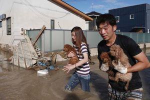 Число жертв стихии в Японии продолжает расти