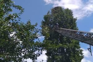 Во Львовской области спасли аиста, застрявшего в ветках на 18-метровой высоте