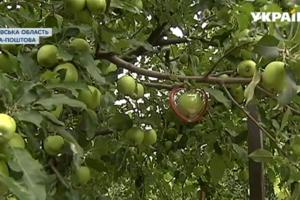 Украинские фермеры начали выращивать дизайнерские овощи и фрукты