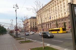 В Киеве на Крещатике массово гибнут молодые каштаны