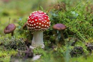 В Харьковской области туристы отравились грибами
