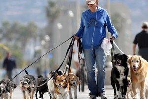 В Венгрии крупная корпорация разрешила ходить на работу с собаками