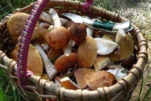 Во Львовской области и Прикарпатье двое женщин отравились грибами