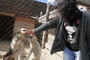 Украинцы просят запретить продажу животных в зоомагазинах и у заводчиков