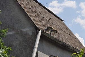 В саду под Одессой поселилась стая мартышек: появились забавные фото