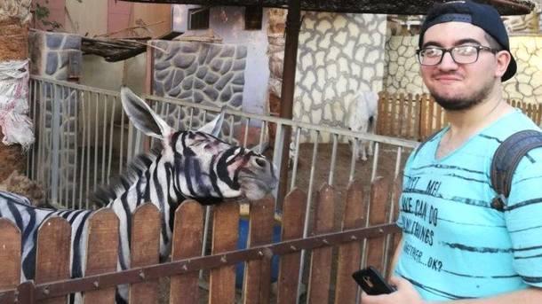 Картинки по запросу В зоопарке Каира ослов покрасили и выдали за зебр
