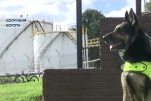 Гроза наркобаронов: в Колумбии собака нашла крупную партию кокаина