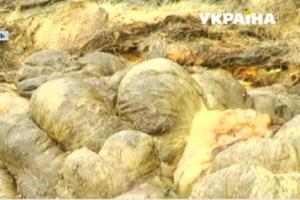В Каменском неизвестные выбросили возле жилых домов отходы скотобойни: горожане страдают от вони