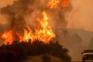 Мир захлестнула волна страшных лесных пожаров
