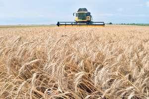 Украина резко сократила экспорт зерна: мировые цены подскочили