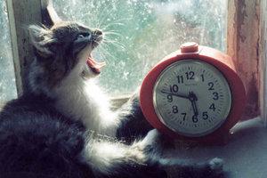 В Сумах установили новый рекорд: в городе одновременно прозвенел 1371 будильник