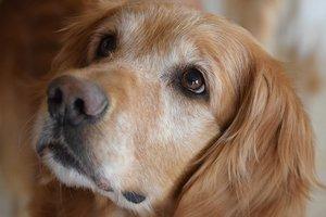 Видеохит: пес забавно спас кота от драки