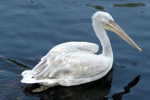 В Одесской области строят остров для пеликанов: опубликованы фото