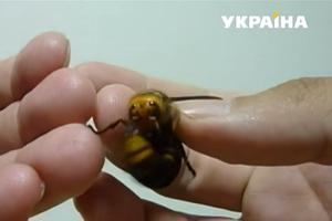 Опасные насекомые атакуют украинцев: как защититься