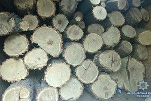В Сумах протестуют против массовой вырубки леса