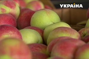 В Украине излишек яблок: как надолго сохранить фрукты дома