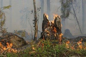 В Марганце горел лес