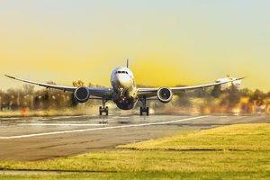 В украинских аэропортах самолеты стали чаще сталкиваться с зайцами