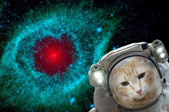 Стань астронавтом. NASA опубликовало приложение для создания селфи вкосмосе