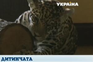 В Харьков приехали три котенка ягуаров
