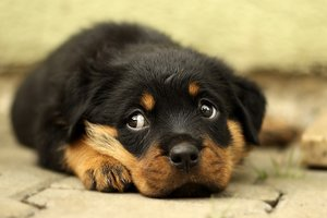 Крошечный беспородный пес пожертвовал жизнью ради хозяйки