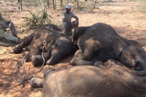 Браконьеры бросили 90 трупов слонов возле заповедника в Ботсване