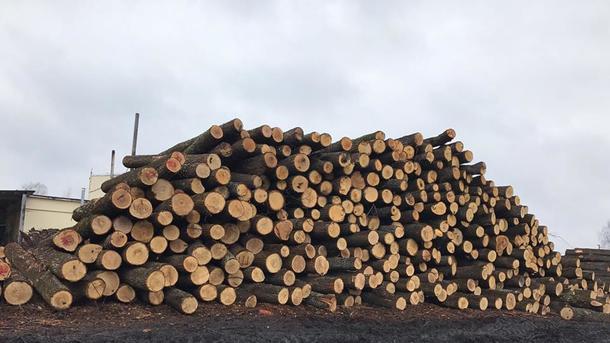 Согласились спрезидентом: нардепы позволила вывоз дров, однако ужесточили наказание законтрабанду