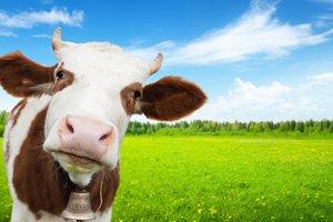 В Бельгии для детей открыли обучающие фермы