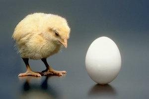 Ученые решили главную загадку тысячелетия о курице и яйце
