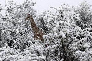 В Африке неожиданно выпал снег