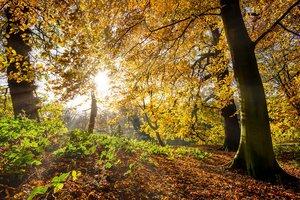 Бабье лето будет коротким: синоптики рассказали, как изменится погода