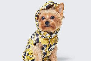 H&M и Moschino выпустят одежду для собак и новую коллекцию