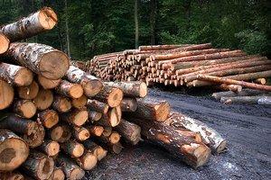 Порошенко поздравил работников лесного хозяйства с профессиональным праздником
