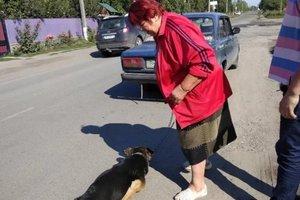 У Вінницькій області жінка протягнула через все місто собаку, прив'язаного до таксі