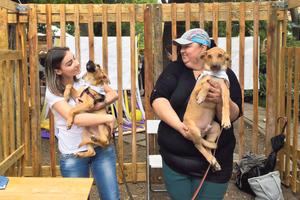В Одессе во время Home Me Fest пристроили в семьи 60 бездомных котов и собак