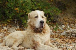 В Одесской области шестилетнюю девочку покусала собака