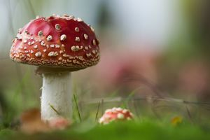 В Киеве участились случаи отравления грибами