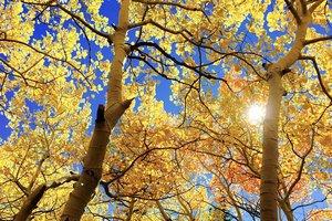 День осеннего равноденствия-2018: как привлечь богатство в дом