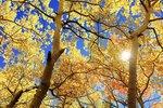 День осіннього рівнодення-2018. Фото: pixabay