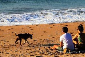 Океан вынес на берег огромное пульсирующее существо: появилось фото