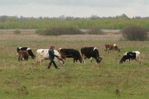 В Украине вымирает поголовье домашнего скота