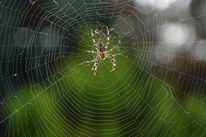 Ужас арахнофоба: пауки оплели паутиной пляж в Греции