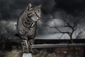 Дожди, грозы и сильный ветер: в Украине объявили штормовое предупреждение
