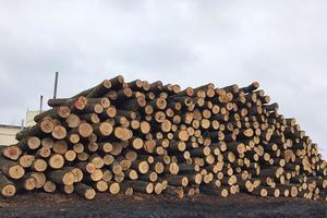 Ліс рубали незаконно й звозили на склад. Фото: поліція