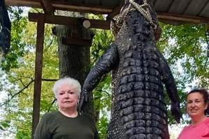 В Техасе пенсионерка пристрелила трехметрового крокодила, который съел ее пони