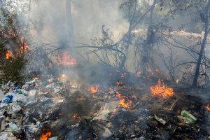 У Києві горять Русанівські сади: стоїть чорний стовп диму, фото і відео